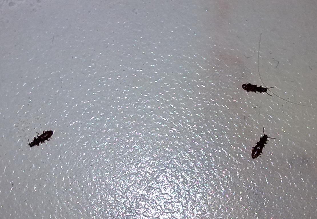 Маленькие жучки в квартире фото